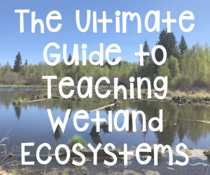 the ultimate guide to teaching wetland ecosystems